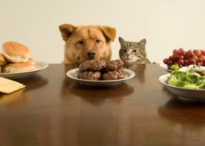 This time, we go on the count of one. (Dog and cat ready for the feast)