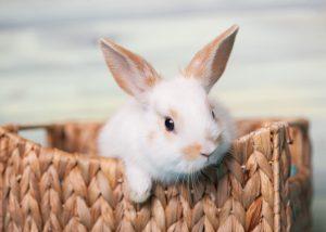 Cute baby bunny looking inquisitive