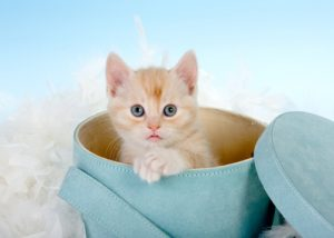 Six weeks old red kitten in a hatbox
