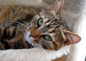 cat-1740911_1280