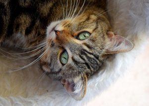 cat-1740912_1280