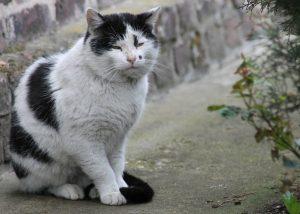 cat-321956_1280