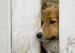 a dog looking through a fence