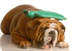 chien-douleur-1